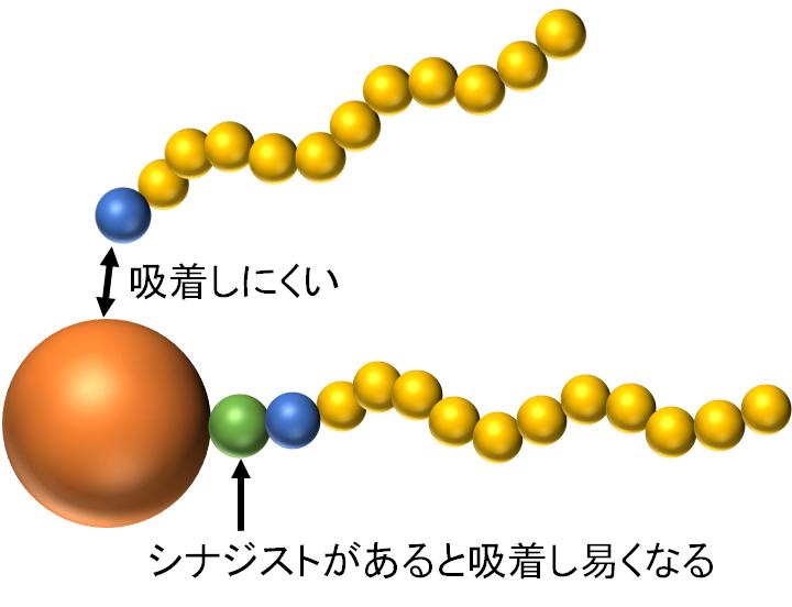 シナジストの効果:高分子分散剤が粒子に吸着するのを補助する